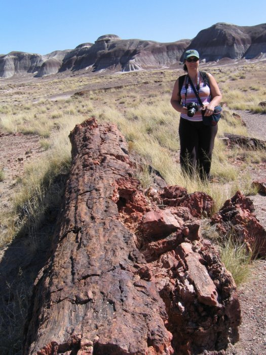 2008 - Petrified Forest
